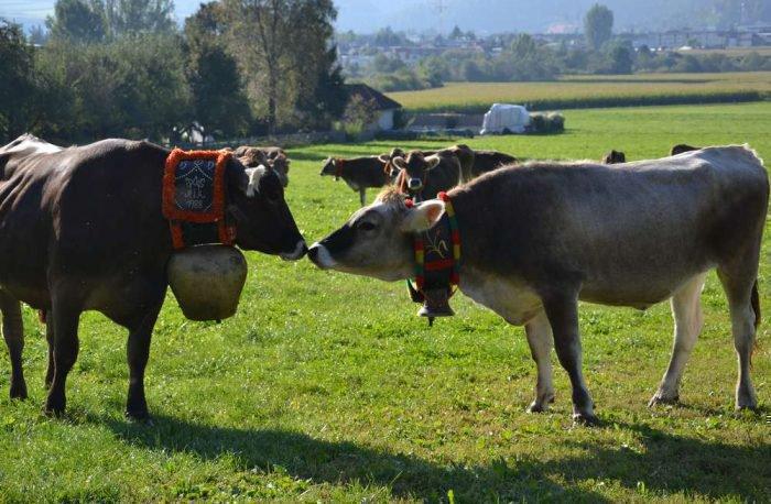 hofbauer-farm-holidays-brunico-04
